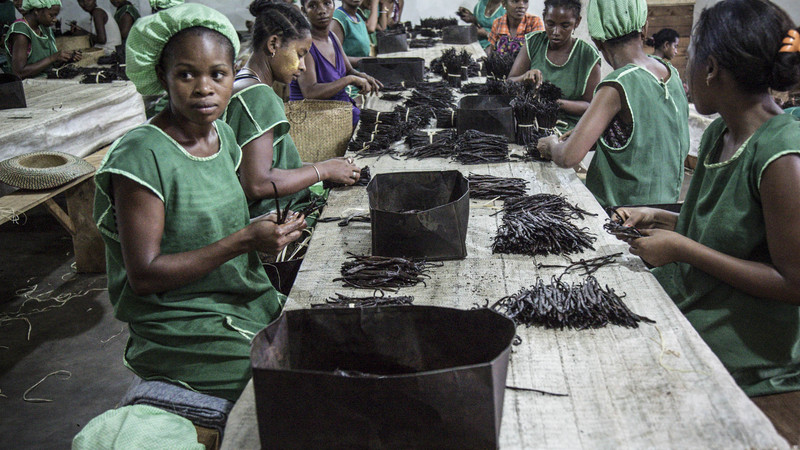 Women sorting sundried black vanilla pods. Credit: Natalie Bertrams.